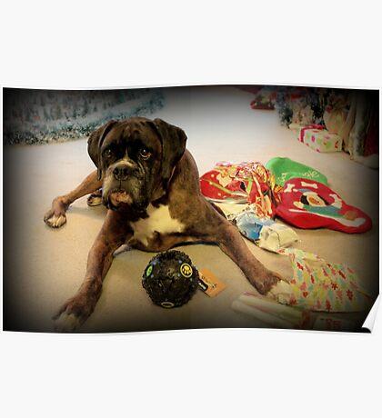 Ist das ein anderes Weihnachtsgeschenk für mich? - Boxer-Hunde-Reihe Poster