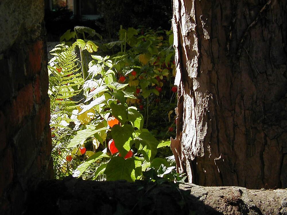 Gooseberries in autumn by megankerr