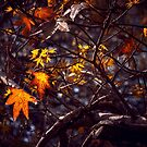 Sweegum Leaves by Patito49