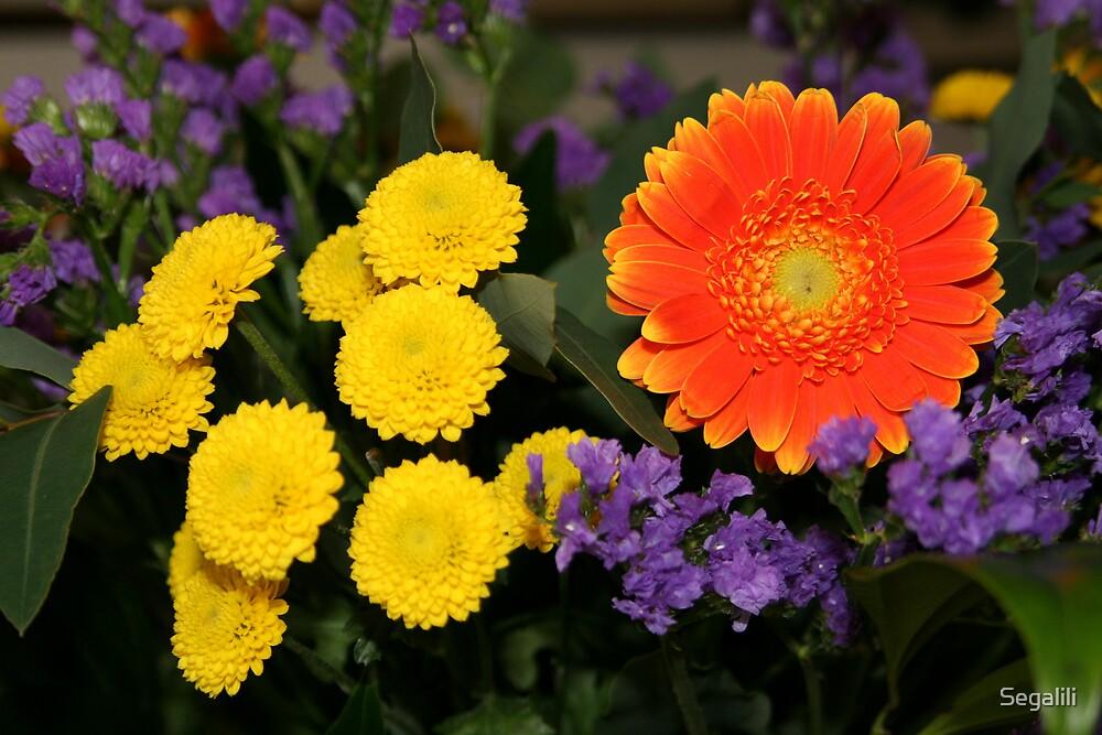 Orange Gerbera by Segalili