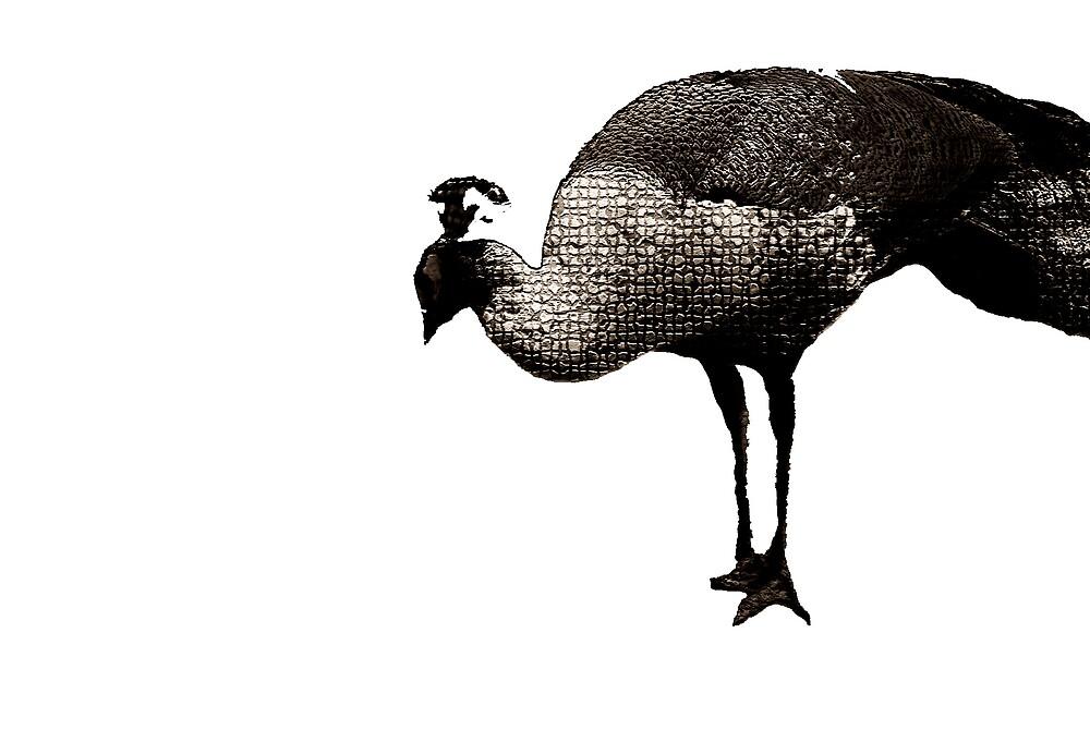 birdy by SherryAnn