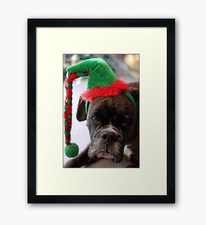 Du willst mich doch veräppeln! - Boxer-Hunde-Reihe Gerahmter Kunstdruck