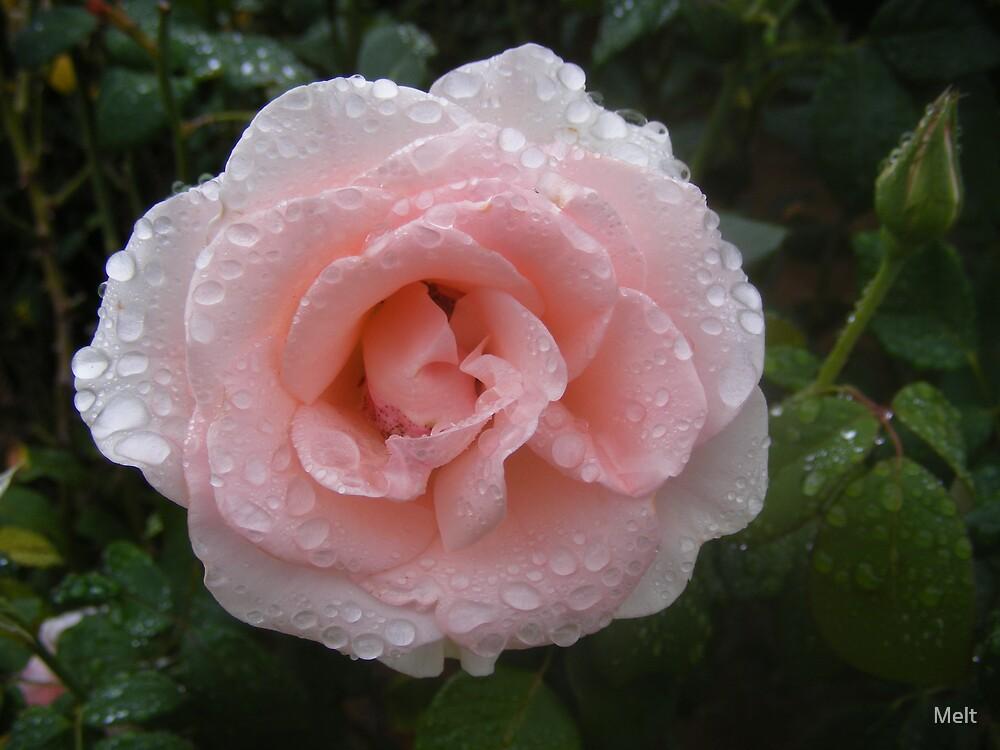 Pink Rose by Melt