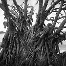 Funky Tree by WeeZie