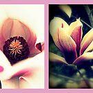 Magnolien von Evita