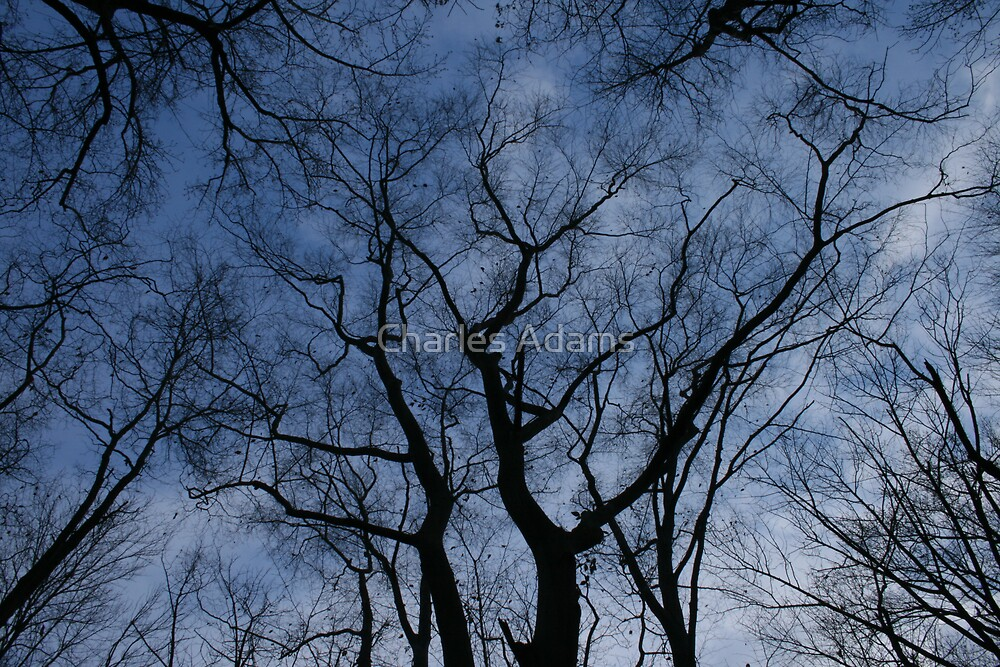 branches by Charles Adams