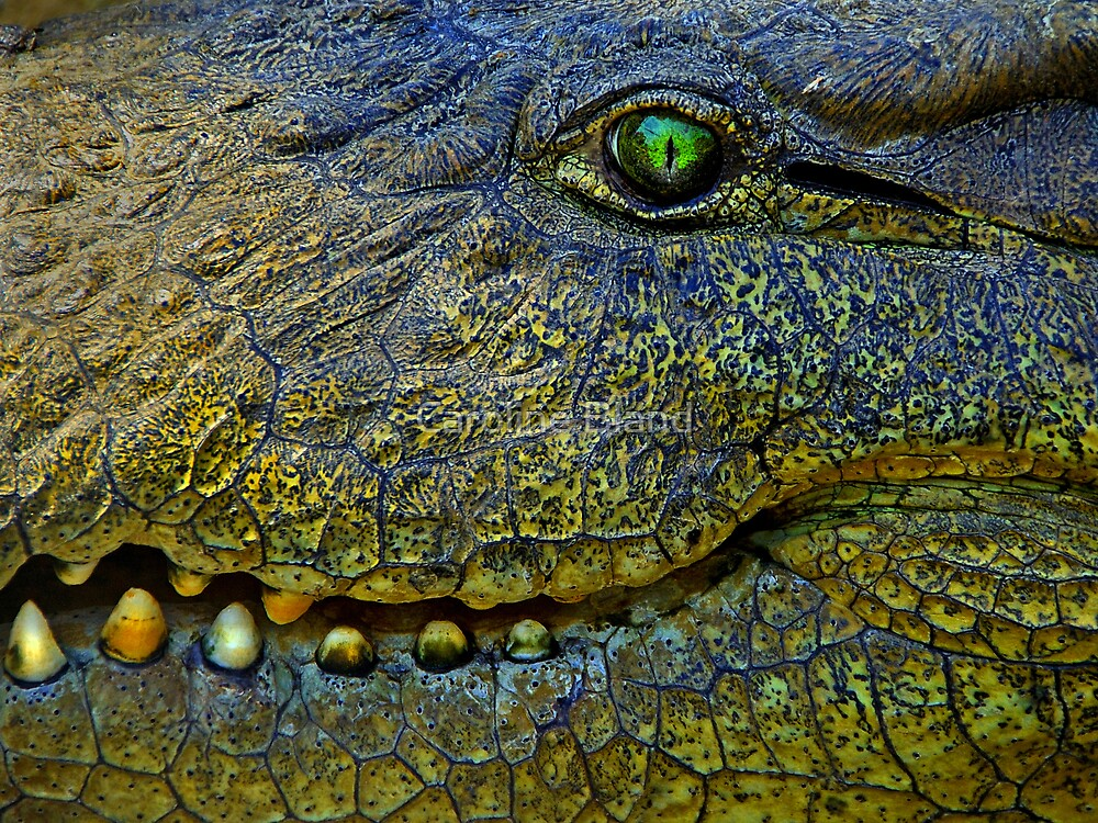 Crocodile Smile by Caroline Bland