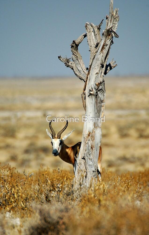 Springbok by Caroline Bland