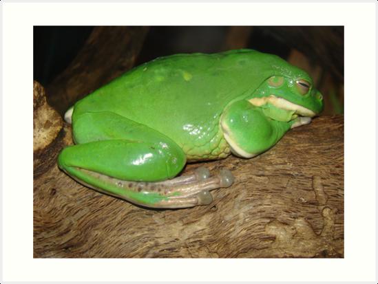 Amphibian by Albert1000