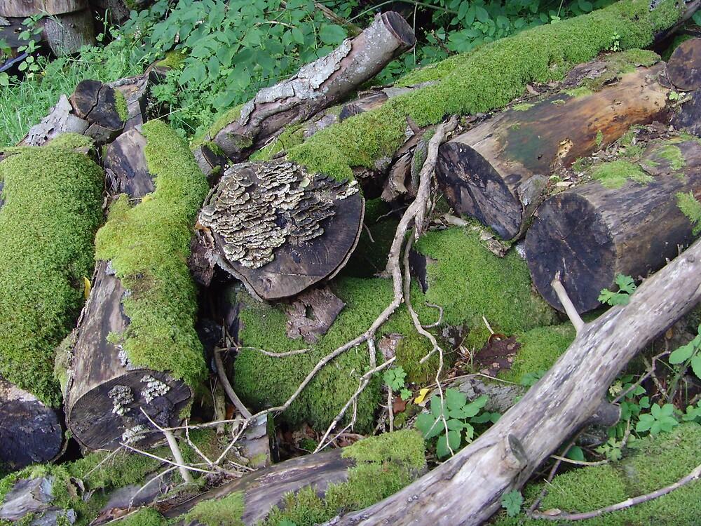 logs by cadburylove