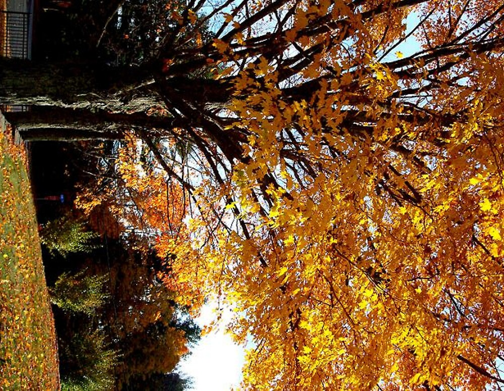fall colors by kaylie4406