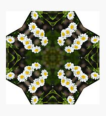 Daisies on Daisies  Photographic Print