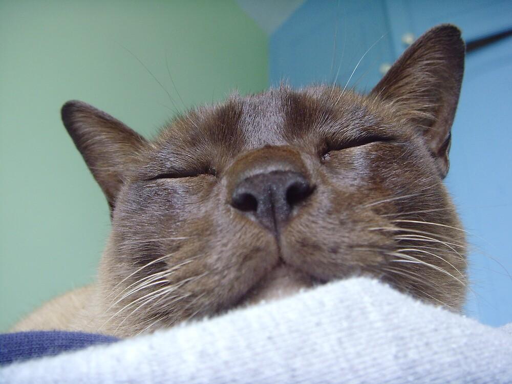 cadbury - my cat!! by cadburylove