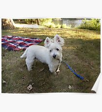 Lakeside Westie Poster