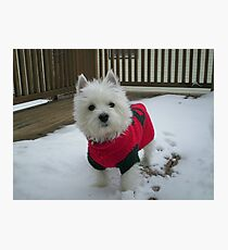 Winnie in the Snow Photographic Print