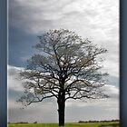 The Tree by Sheryl Gerhard