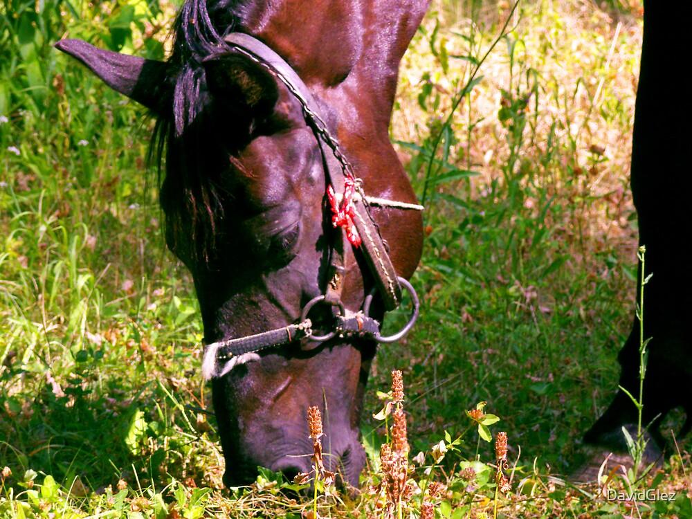 Horse by DavidGlez