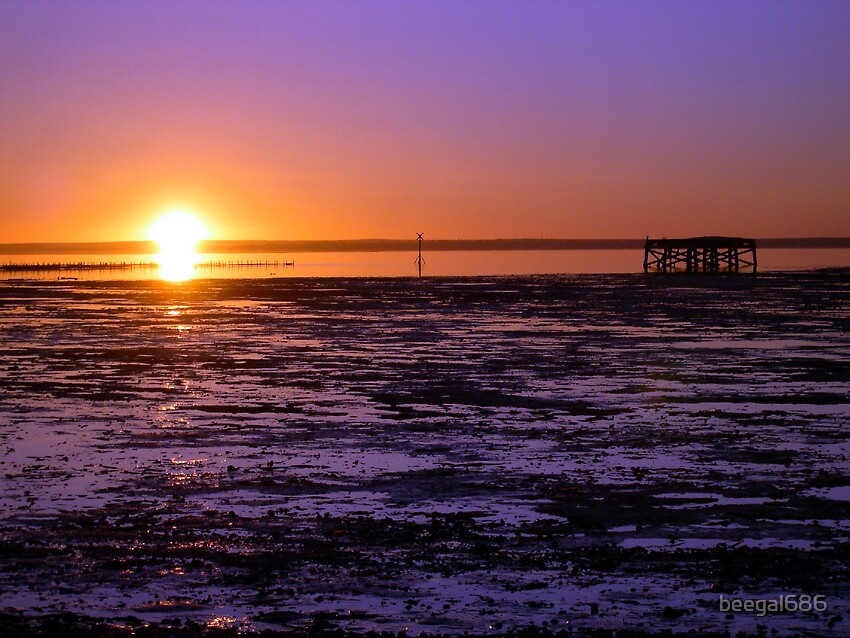 Purple Sunrise by beegal686