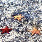 Starfish Point by Jeri Garner