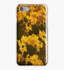 A host of golden daffodils iPhone Case/Skin
