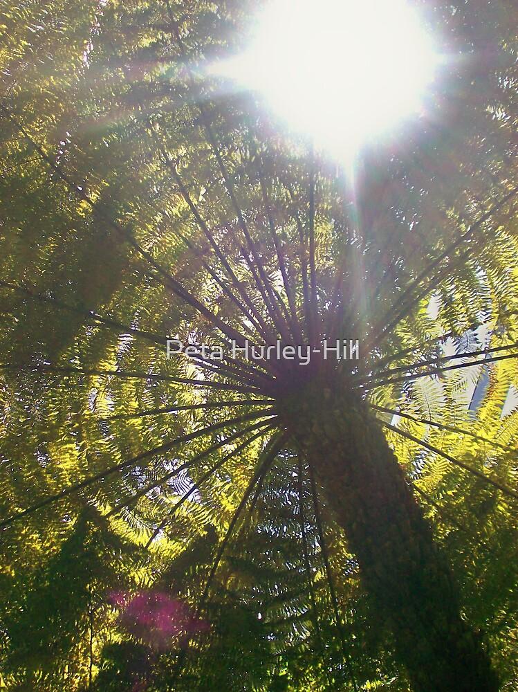 canopy by Peta Hurley-Hill