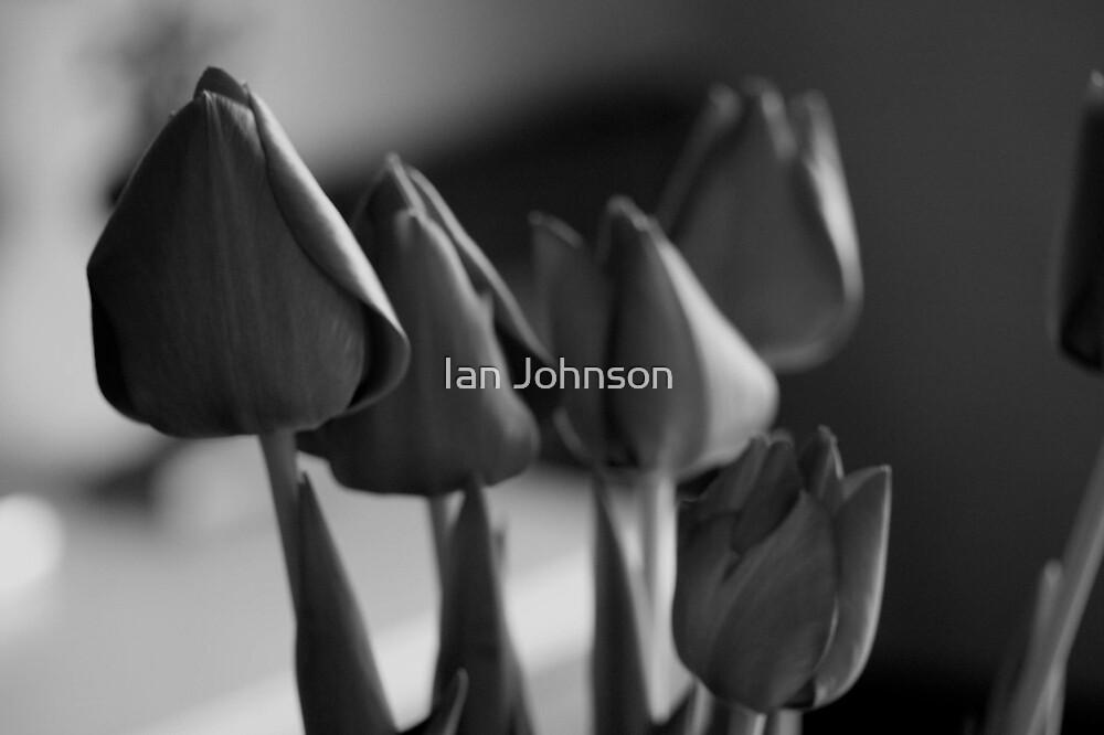 Tulips by Ian Johnson