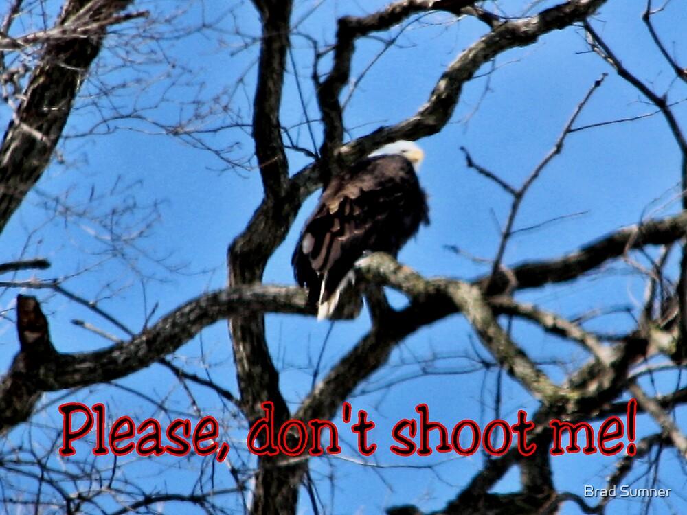 Roosting American Bald Eagle by Brad Sumner