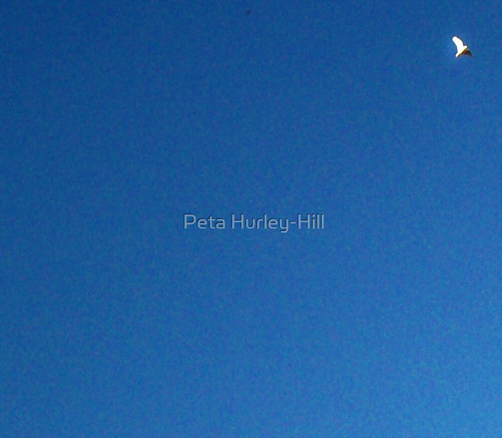 free by Peta Hurley-Hill