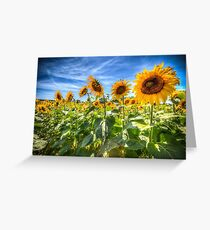 Sunflower Power! Greeting Card