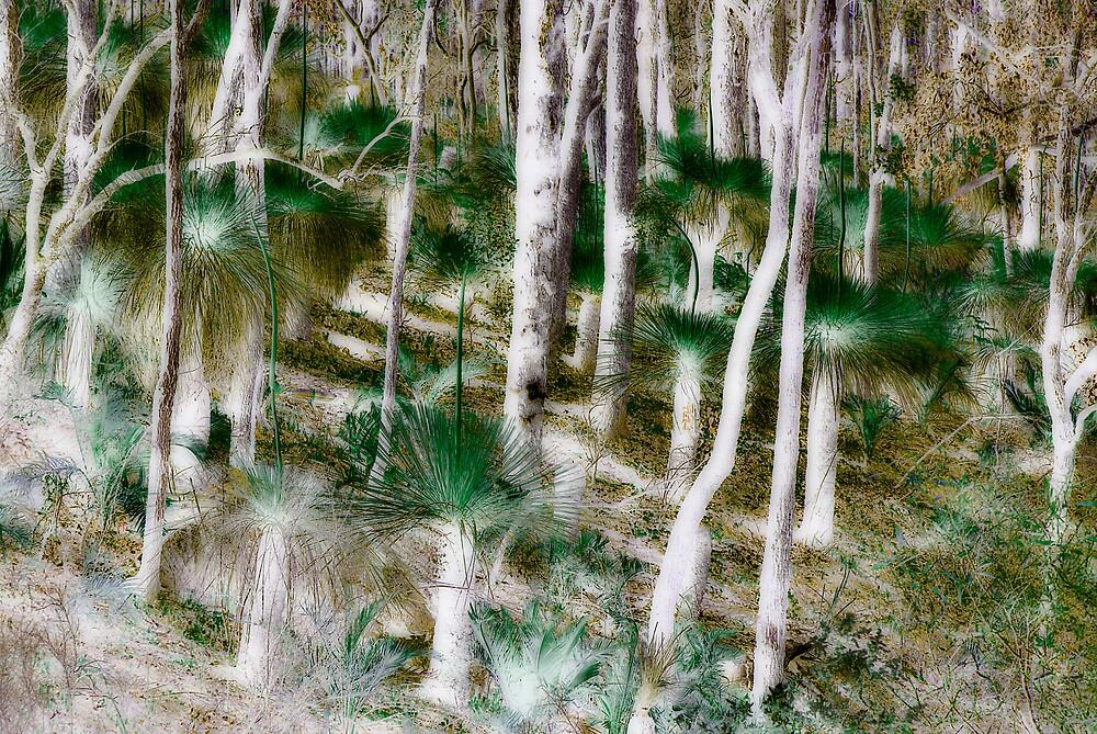 bush by alistair mcbride