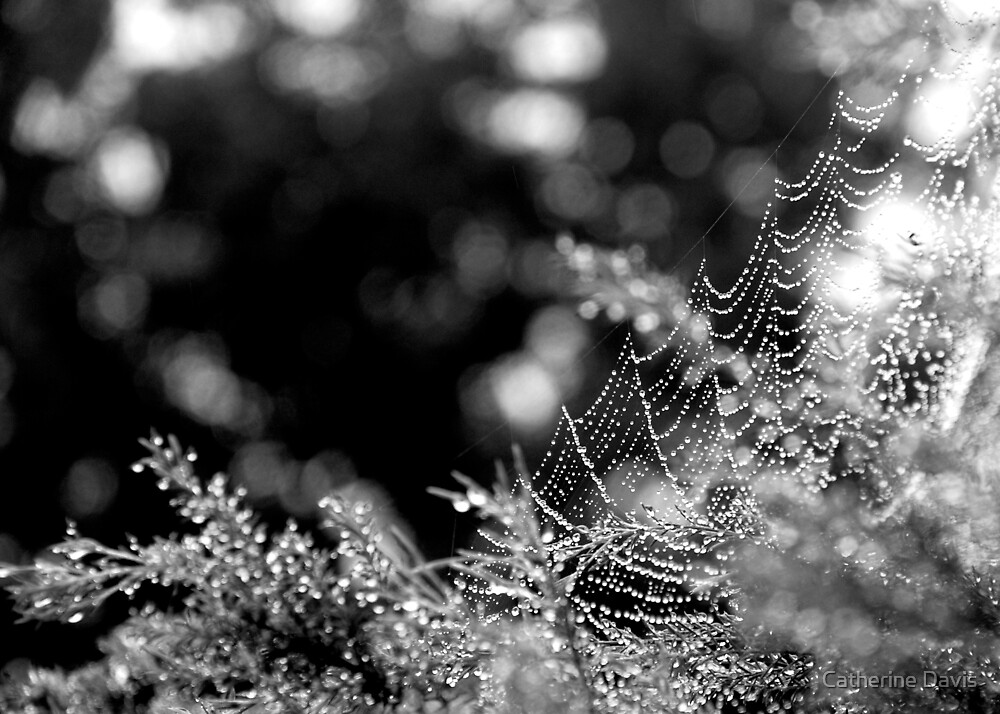 Lacy, Black and White by Catherine Davis
