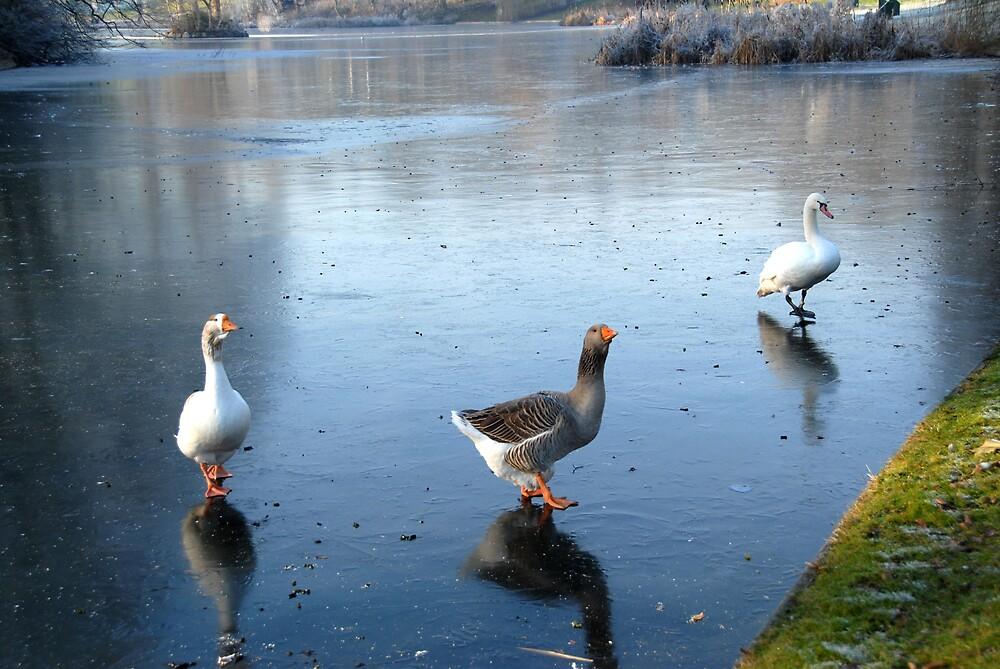A Winter's Tale in Four Shots - 4 by jensNP