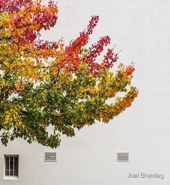 Autumn Wall by Joel Bramley