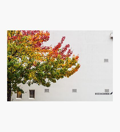Autumn Wall Photographic Print