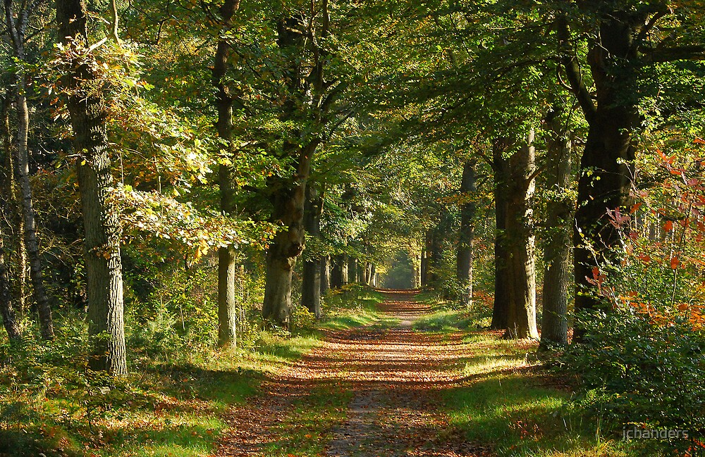 Early autumnal laneland by jchanders