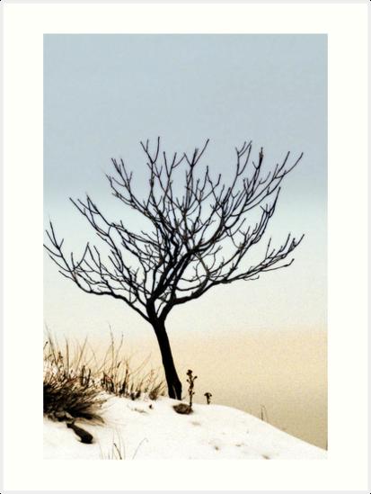 Solitude by Ryan Houston