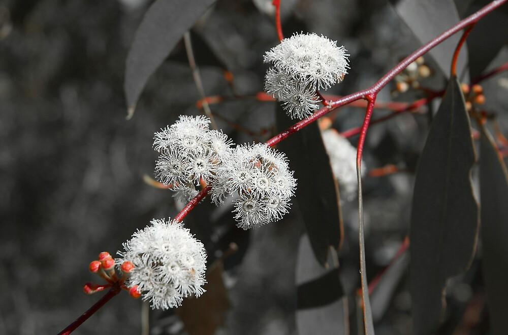 Gumtree Gray by Rowan Stenhouse
