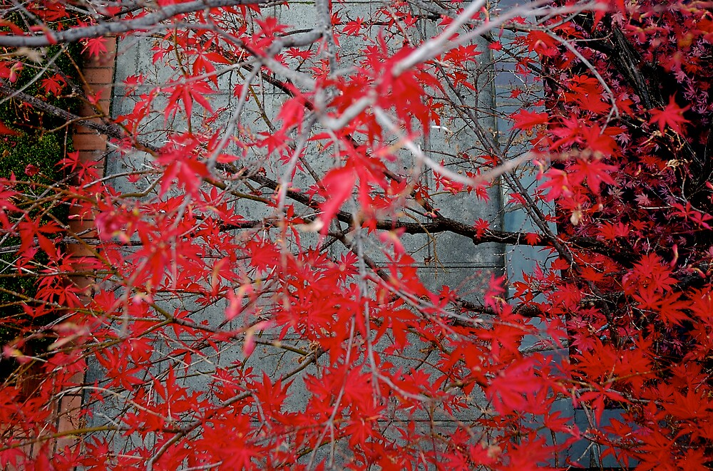Autumn Hue by Rowan Stenhouse