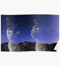 Cat and night sky Poster