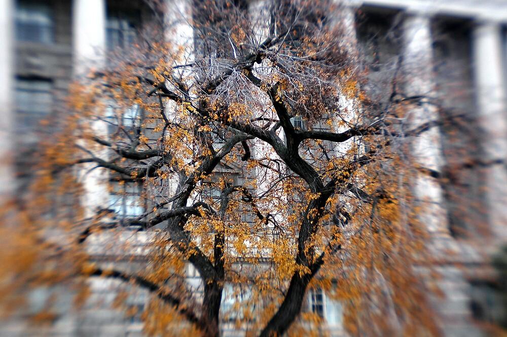 DC Tree by ParkerWayne