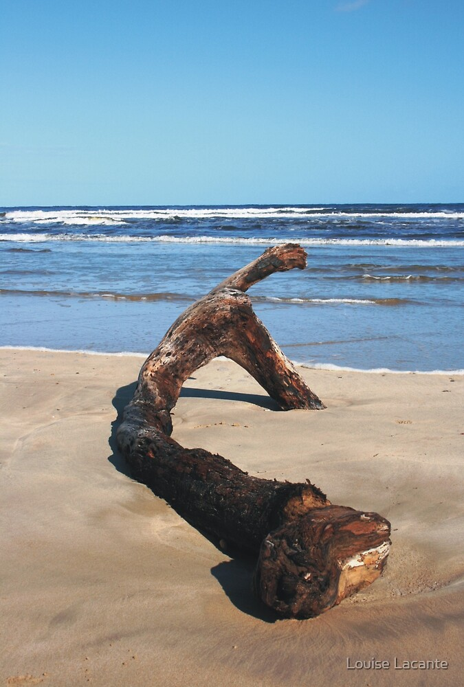 Driftwood by Louise Lacante