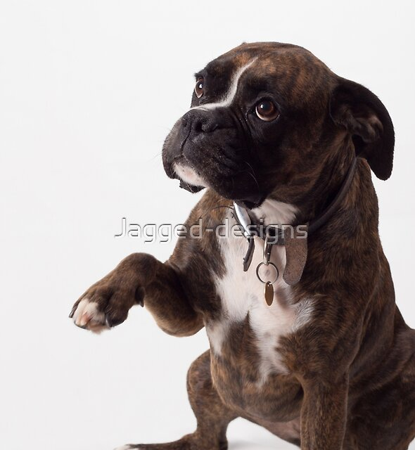 Boxer dog by Jagged-designs