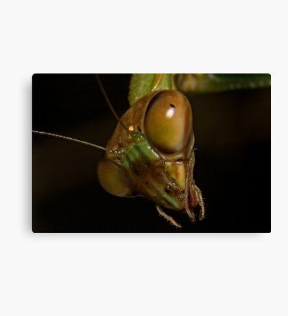 Mantis Head Canvas Print