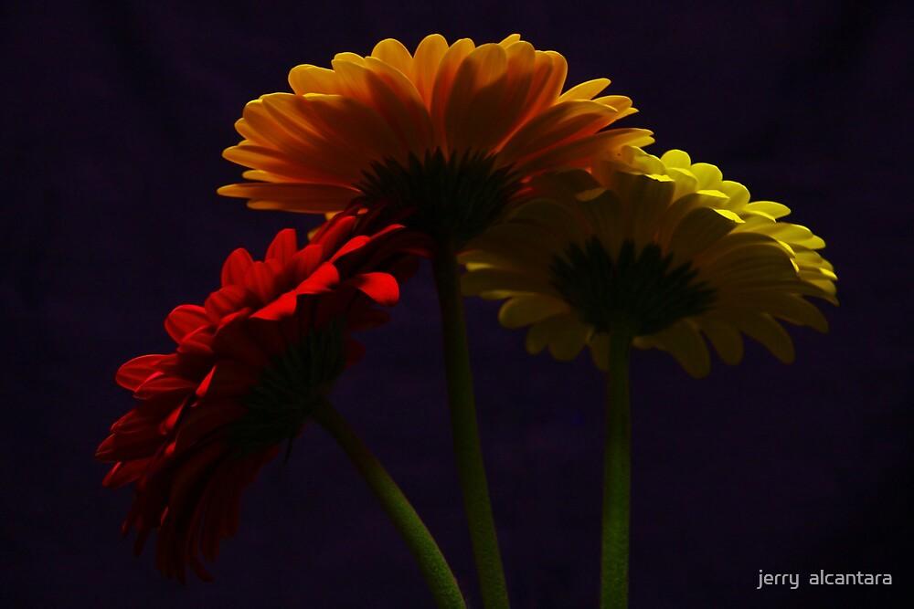 Three by jerry  alcantara