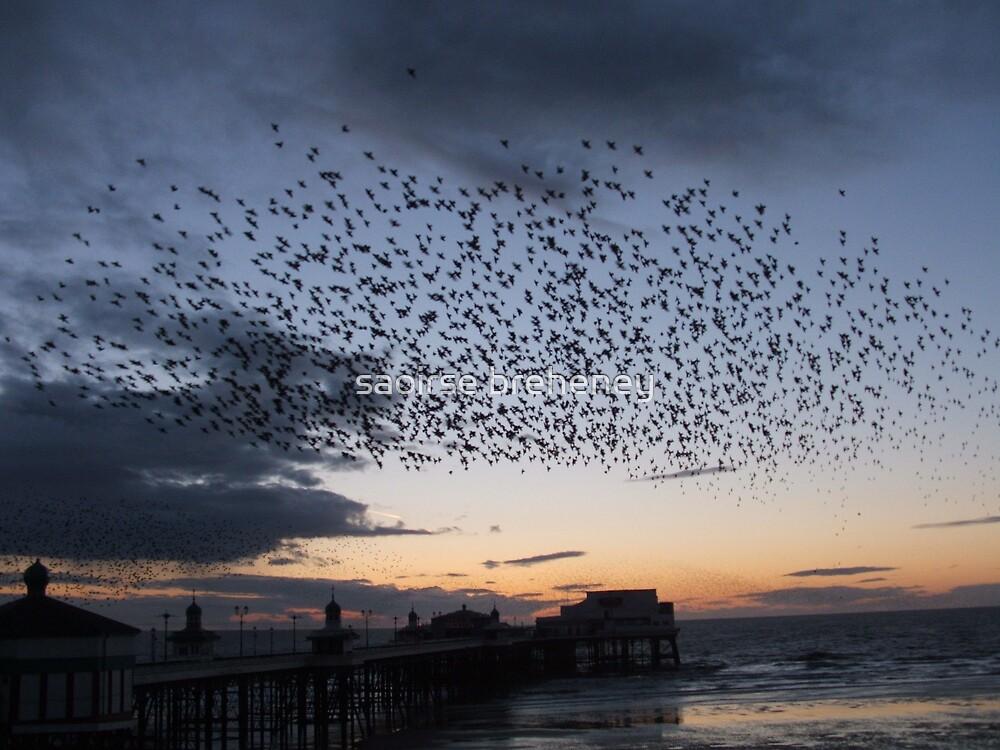 The birds. by saoirse breheney