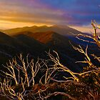 0389 Mt Hotham Brush by DavidsArt