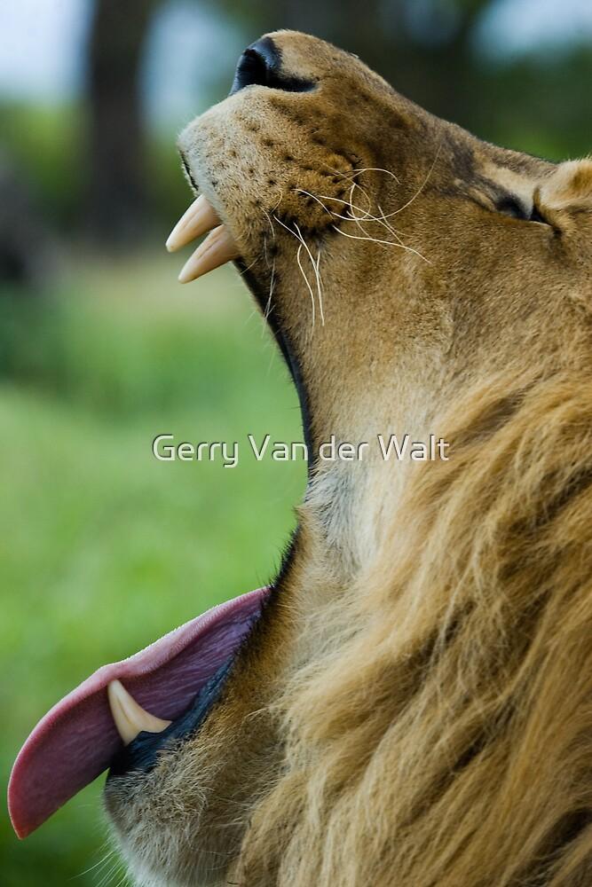 Say 'Aaaahhh'! by Gerry Van der Walt