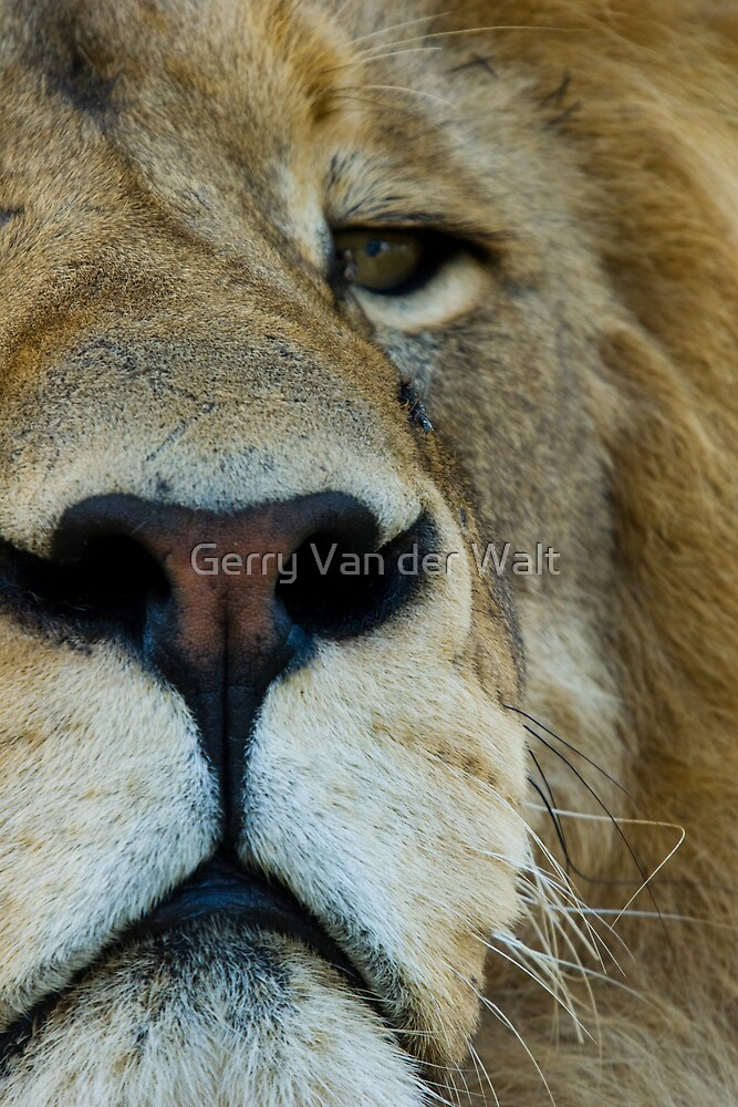 The Look by Gerry Van der Walt