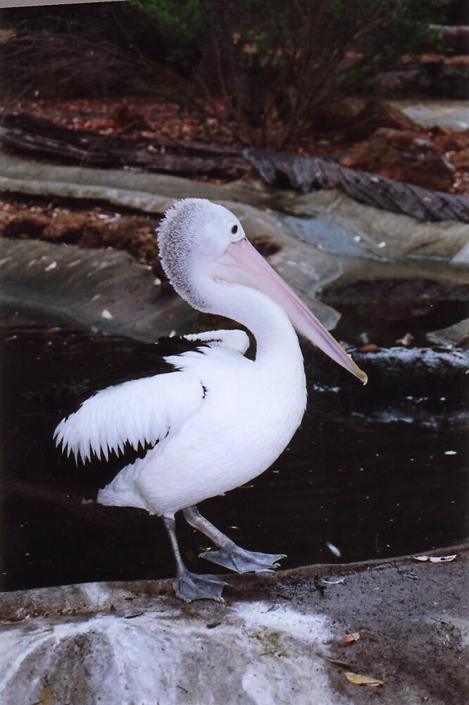 Pelican by ree81