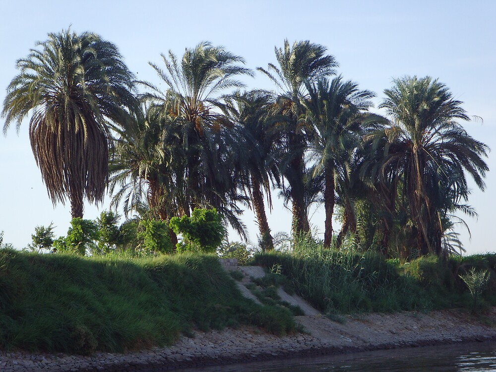 Palm Trees on the Nile, Egypt! by sophielouisep